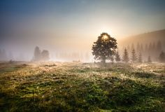Paisaje majestuoso de las montañas con las hojas verdes frescas Foto de archivo libre de regalías