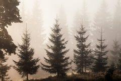 Paisaje majestuoso de las montañas con las hojas verdes frescas Imagen de archivo