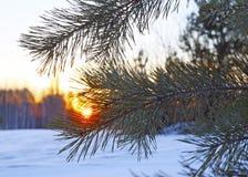 Paisaje majestuoso del invierno que brilla intensamente por luz del sol por la mañana foto de archivo libre de regalías
