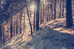 Paisaje maravilloso del invierno Fotografía de archivo libre de regalías