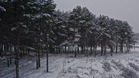 Paisaje maravilloso del invierno del bosque de la helada, colinas nevosas Mosca aérea para arriba por las ramas de árbol de la pi metrajes