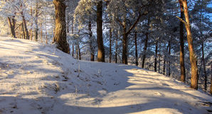 Paisaje maravilloso del invierno por la mañana Imágenes de archivo libres de regalías