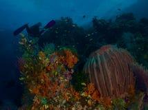 Paisaje marino Imagenes de archivo