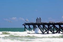 Paisaje marino con el embarcadero y las gaviotas Foto de archivo libre de regalías
