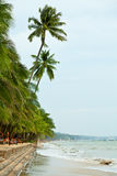 Paisaje marino con las palmeras Imagen de archivo