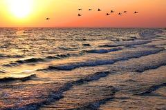Paisaje marino con los patos en la puesta del sol Foto de archivo