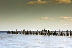 Paisaje marino con un embarcadero de madera y los cormoranes. Foto de archivo libre de regalías