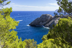 Paisaje marino de los pinos Imagen de archivo libre de regalías