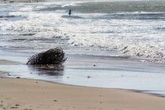 Paisaje marino del invierno Fotografía de archivo