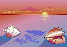 Paisaje marino del Sea-shell Imagen de archivo