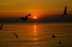 Paisaje marino dramático y gaviotas en el cielo de la puesta del sol Fotografía de archivo libre de regalías