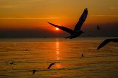 Paisaje marino dramático y gaviotas en el cielo de la puesta del sol Fotografía de archivo