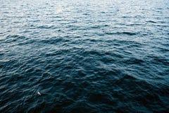 Paisaje marino frío del invierno Foto de archivo libre de regalías