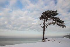 Paisaje marino hermoso del invierno con el pino en la costa Foto de archivo