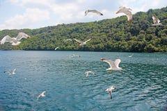 Paisaje marino Las gaviotas blancas vuelan contra el mar azul y Fotografía de archivo libre de regalías