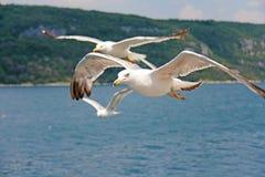 Paisaje marino Las gaviotas blancas vuelan sobre el mar Fotos de archivo