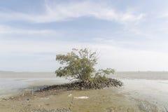 Paisaje marino a solas del árbol Foto de archivo