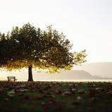 Paisaje marino Suiza Bielersee Bern Tree Bench Horizon Fotografía de archivo libre de regalías