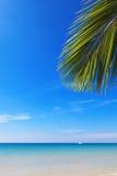 Paisaje marino y ramificación de la palma de coco Imágenes de archivo libres de regalías