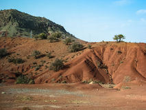 Paisaje marroquí clásico - árboles rojos de la montaña y del argan imágenes de archivo libres de regalías
