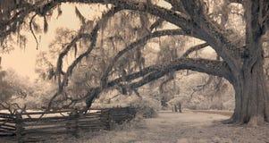 Paisaje meridional Fotos de archivo