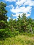 Paisaje Michigan de los arbolados del pino Imagen de archivo libre de regalías