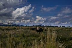 Paisaje mistic andino con toros clowdy de los cielos y un aldeano local imagenes de archivo