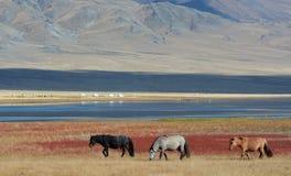 Paisaje mongol 2 Fotografía de archivo libre de regalías