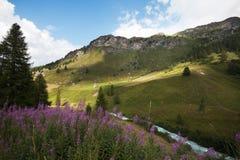 Paisaje, montaña, pasto, prado, Suiza Foto de archivo libre de regalías