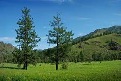 Paisaje, montañas y prado del verano Fotografía de archivo