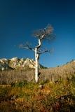 Paisaje muerto del árbol Foto de archivo libre de regalías