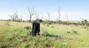Paisaje muerto del árbol en el verano africano foto de archivo libre de regalías