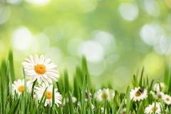 Paisaje natural abstracto con las flores de la margarita de la belleza foto de archivo libre de regalías