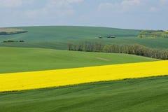 Paisaje natural con los campos verdes y amarillos debajo del cielo azul Fotografía de archivo libre de regalías