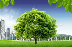 Paisaje natural. concepto ecológico Fotografía de archivo