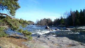 Paisaje natural de Kymi en movimiento rápido del agua de Finlandia, río a lo largo del bosque costero almacen de video