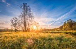 Paisaje natural del paisaje en prado en salida del sol brillante el mañana de la primavera Hierba de la primavera, árboles y ciel Imagen de archivo
