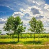 Paisaje natural del verano de árboles verdes en un prado contra un cielo azul nublado en un día soleado brillante Naturaleza en e Fotos de archivo libres de regalías