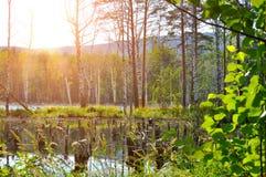 Paisaje natural del verano en la isla de StFaith en Urales meridionales, Rusia Imagen de archivo