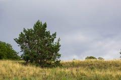 Paisaje natural del verano: prado, campo con un árbol spruce y nubes Imagen de archivo
