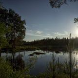 Paisaje natural La hierba, los árboles en la orilla de un lago o río Depósitos en el salvaje Imagen de archivo libre de regalías
