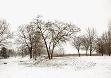 Paisaje Nevado con los árboles Fotografía de archivo