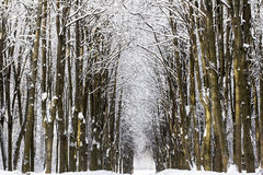 Paisaje nevado del bosque del invierno Foto de archivo