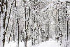 Paisaje nevado del bosque del invierno Imagen de archivo