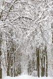 Paisaje nevado del bosque del invierno Fotos de archivo