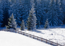 Paisaje nevoso congelado hermoso del invierno del bosque del abeto Foto de archivo libre de regalías