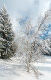 Paisaje nevoso de la montaña del invierno Fotos de archivo libres de regalías