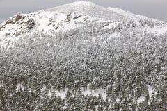 Paisaje nevoso del bosque de la montaña del invierno Navacerrada, España Fotos de archivo