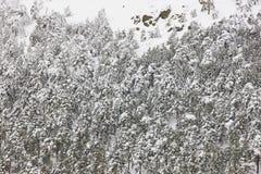 Paisaje nevoso del bosque de la montaña del invierno Navacerrada, España Fotografía de archivo libre de regalías