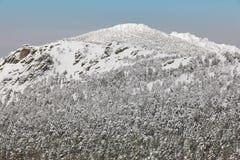Paisaje nevoso del bosque de la montaña del invierno Navacerrada, España Foto de archivo libre de regalías